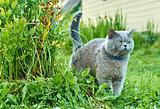Cat is marking territory
