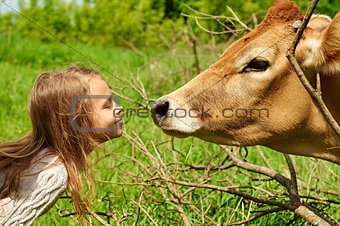 Smiling schoolgirl plays with a cow