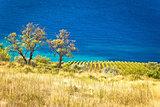 Vineyard and beautiful coast by turquoise sea