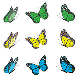 vector butterfly set
