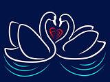 Swan Couple in Love