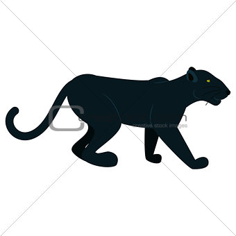 Black panther wild animal isolated on white.