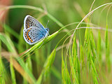 Colorful moth