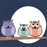 Funny, staring owls family sitting