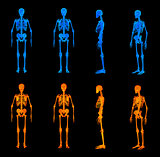 3d render illustration of the red skeleton