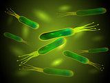 Helicobacter pylori bacteria. Vector.