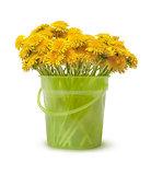 Spring bouquet of dandelions
