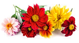 Bunch bright red and yellow flowers with