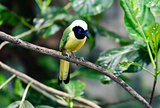 one lovely and noisy exotic bird