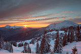 winter forest and mountains Carpathians