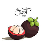 Sweet mangosteen illustration