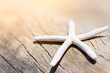 starfish on wooden texture