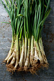 raw calcots, sweet onions typical of Catalonia, Spain
