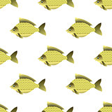 Carp Seamless Pattern