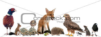 group of wild animals in Europe