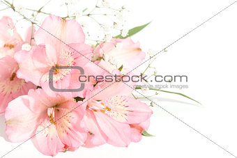 small bouquet of alstroemeria with gypsophila on a white backgro