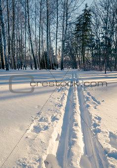 Ski Tracks in Snowy Winter Park