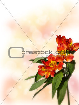 small bouquet of red alstroemeria on a colored background