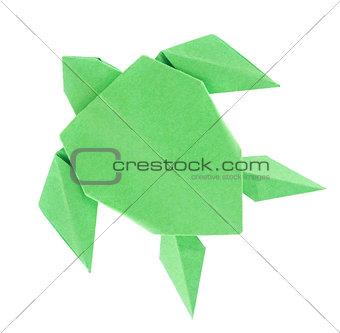Green sea turtle of origami.