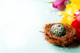 Easter egg in birds nest with spring flowers