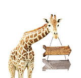Giraffe with two wooden arrows