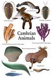 Cambrian Animals