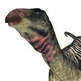 Lurdusaurus Dinosaur Head