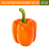 Orange pepper on white background. Vector illustration