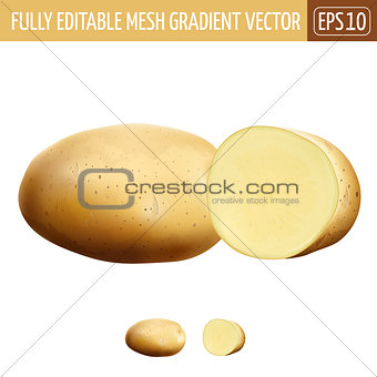 Potatoes on white background. Vector illustration