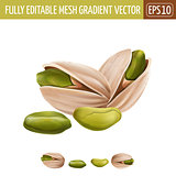 Pistachio nuts on white background. Vector illustration