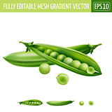 Green peas on white background. Vector illustration