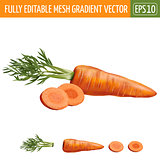 Carrot on white background. Vector illustration