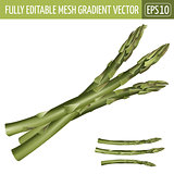Asparagus on white background. Vector illustration