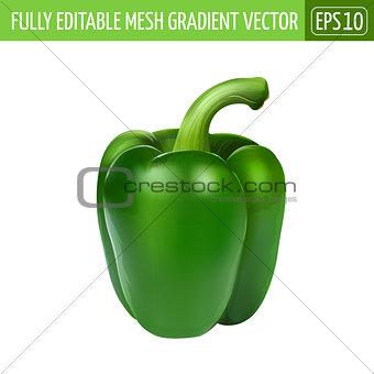 Green pepper on white background. Vector illustration