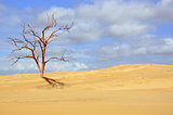 Dead tree in sandy desert landscape