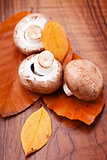 Mushrooms: Champignons on autumn leaves