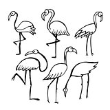 Flamingo, sketch for your design