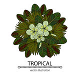 Tropic vector illustration.