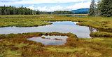 New England Marshland
