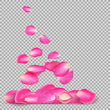 Abstract background with realistic flying pink rose petals on a white transparentt background. Vector illustration. EPS 10.