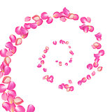 Spiral of flying sakura petals. Realistic vector pink petals on white background.