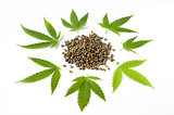 raw cannabis marijuana seed and leaves