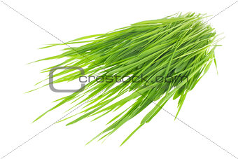 Green sprout of wheat and rye.