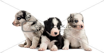 Group of puppies sitting isolated on white
