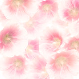 Pink Hollyhock Flowers
