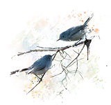 Blue-gray Gnatcatchers watercolor