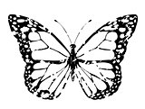 vector grunge butterfly