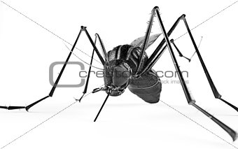 Black isolated mosquito