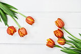 Tulips and Blank Card