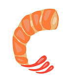 Shrimp vector illustration